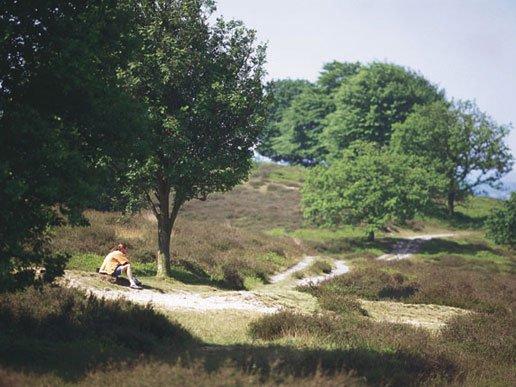 bungalowpark Landal veluwse hoevegaerde Gelderland